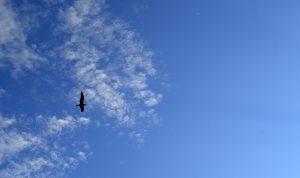 bird Sevan