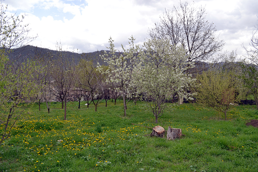 Narek Madoyan garden