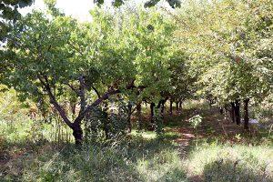 Dalma garden