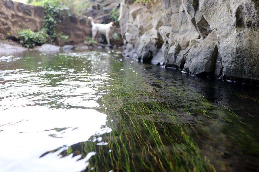 Dalma Canal